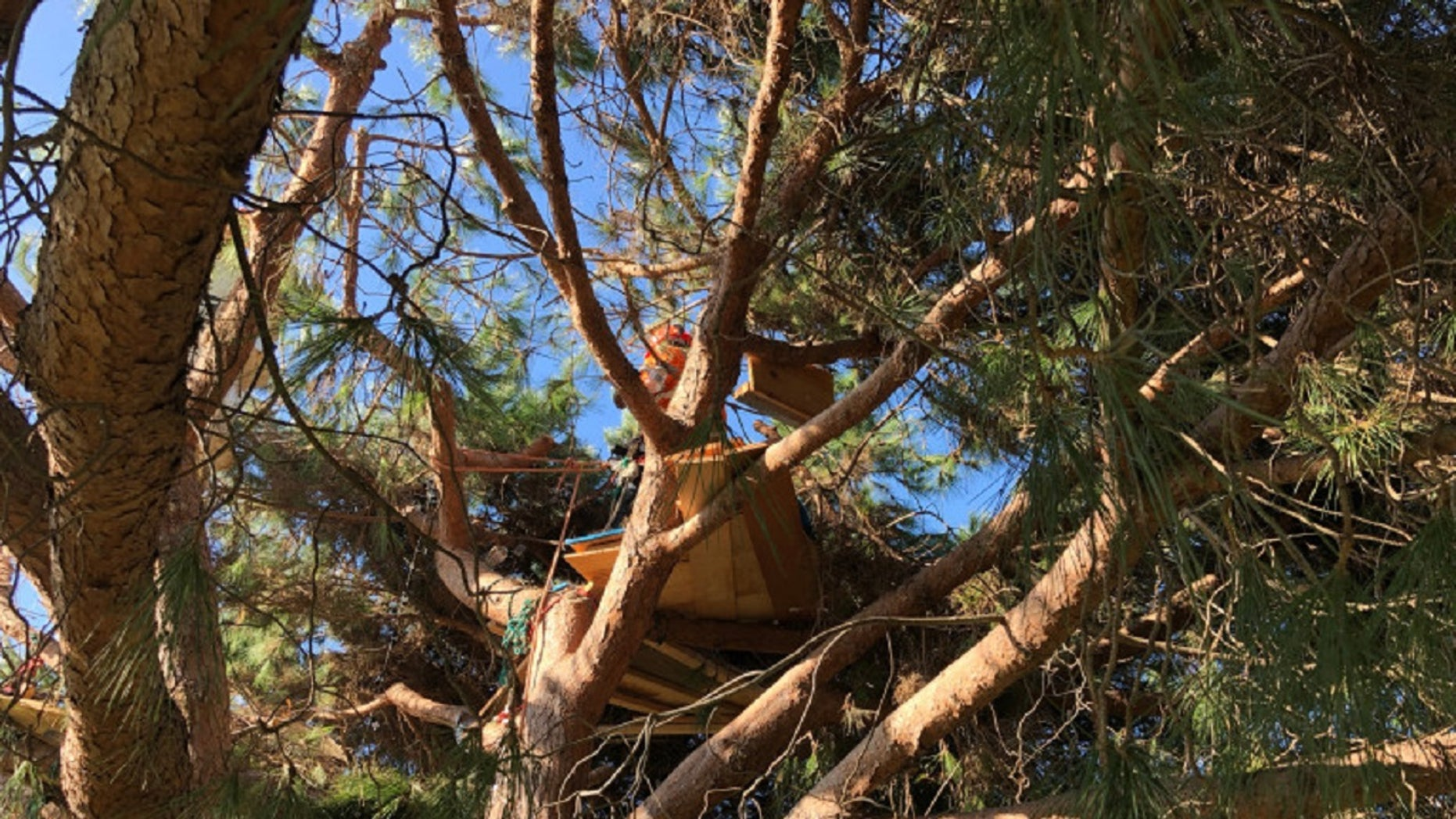 Authorities believe the tri-level tree house, equipped with an aquarium and ocean views, belonged to a homeless person.