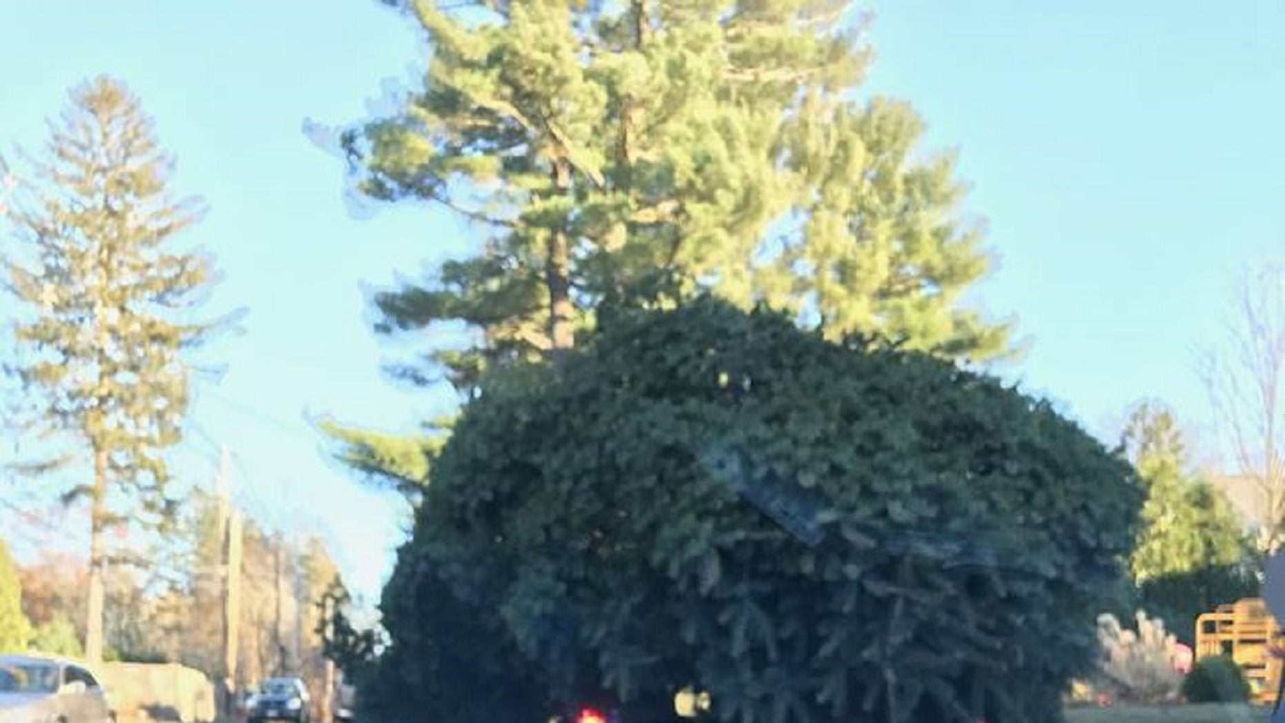 Sudbury police say that they stopped a vehicle which had a large tree on top of it.