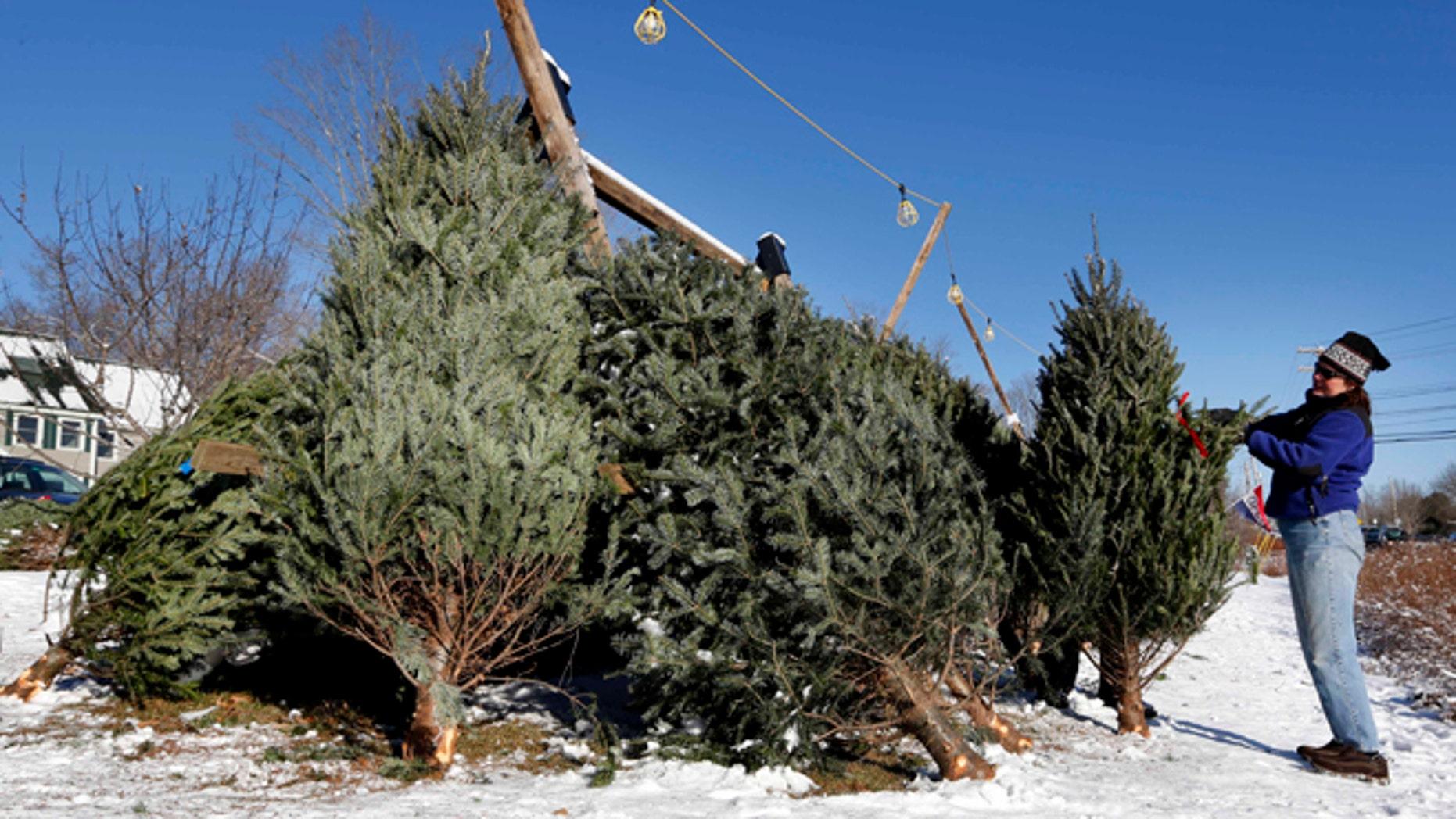 Dec. 12, 2013: A customer picks a Christmas tree in Freeport, Maine.