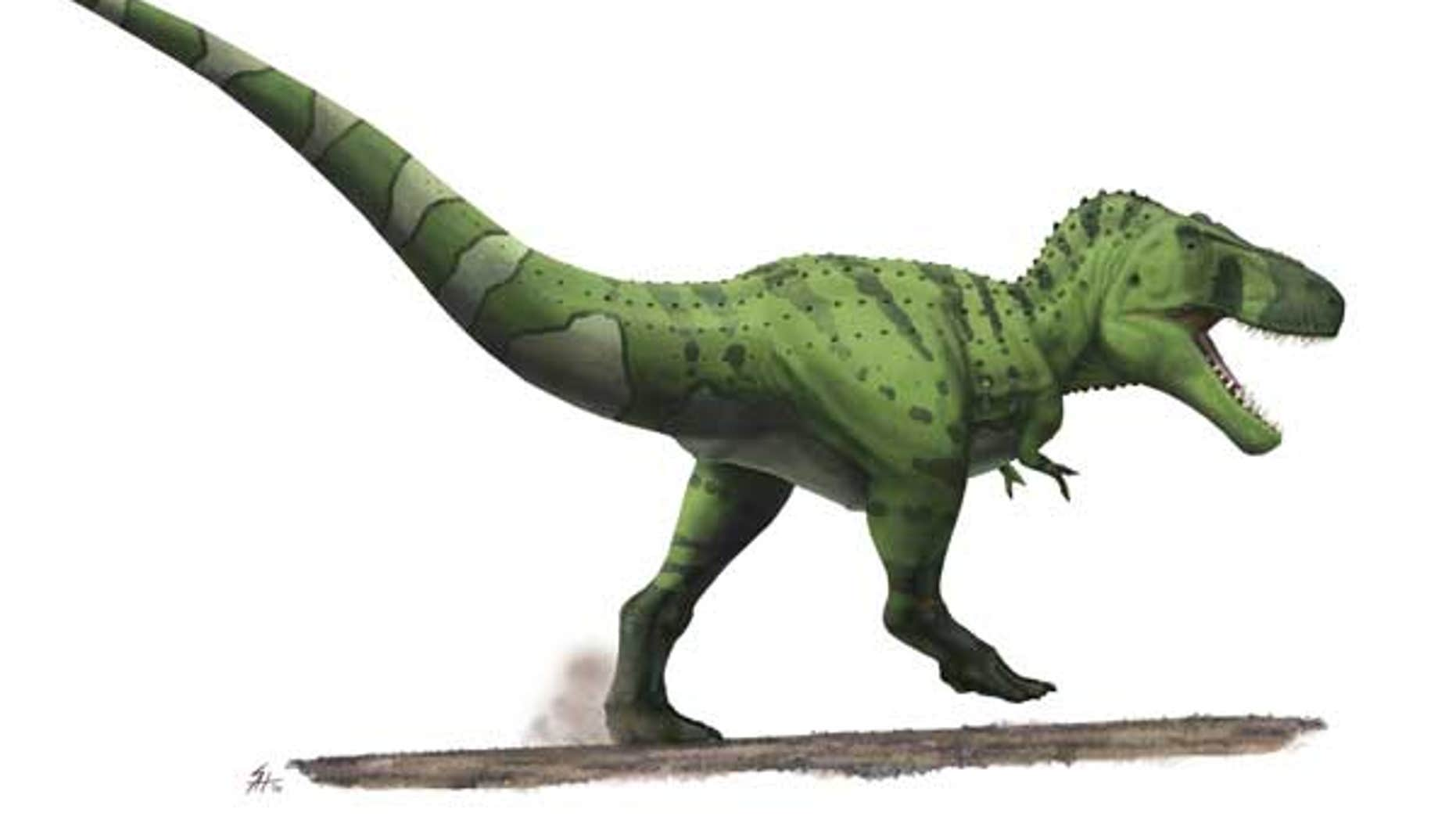 Here a fleshed-out reconstruction of the meat-eater T. rex reveals its bulky rear end and tail muscles