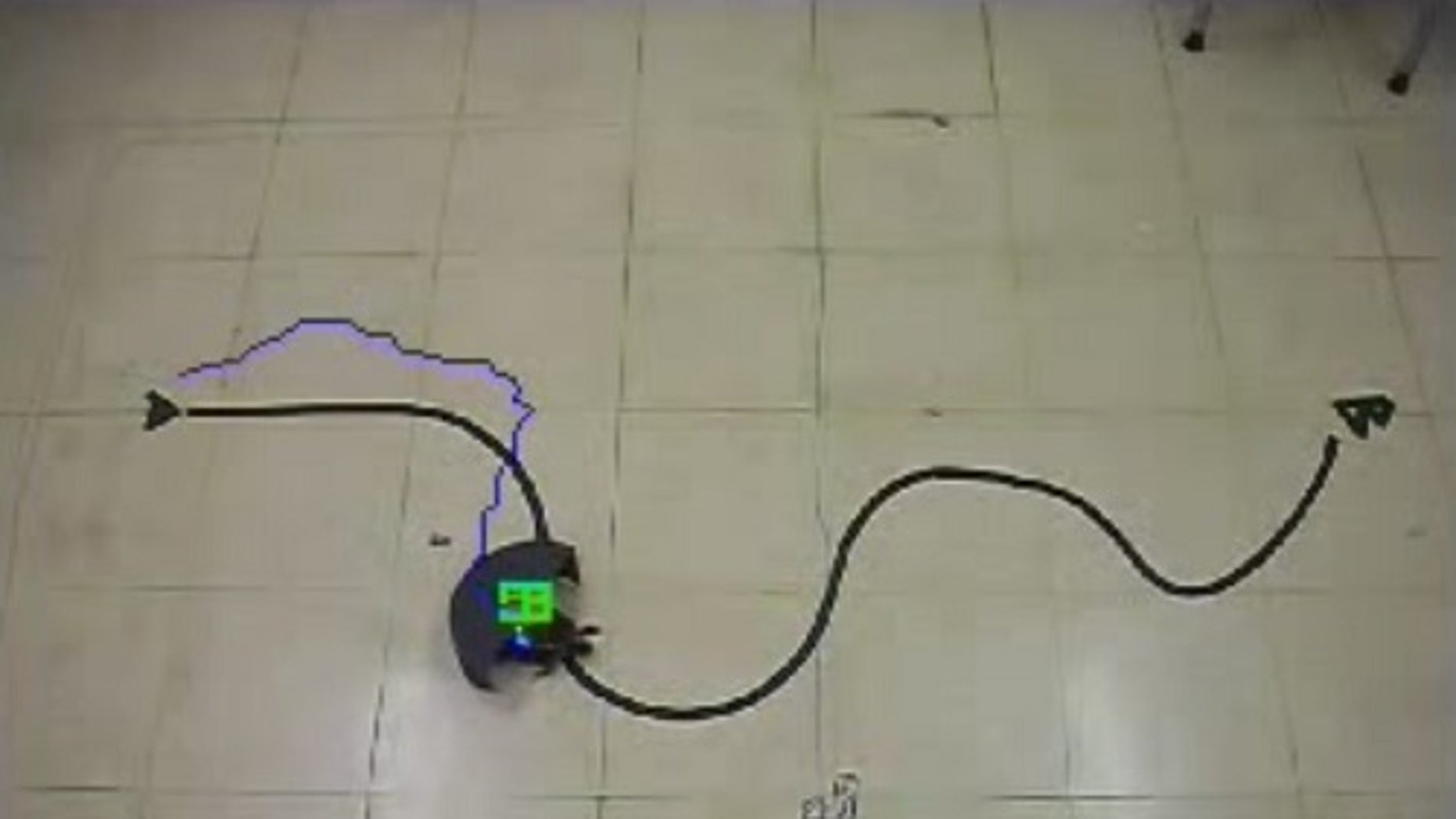 This video still shows a red-eared slider being guided along a set path. The half-cylinder device on the animal's back swings around to simulate obstacles, causing it to turn.