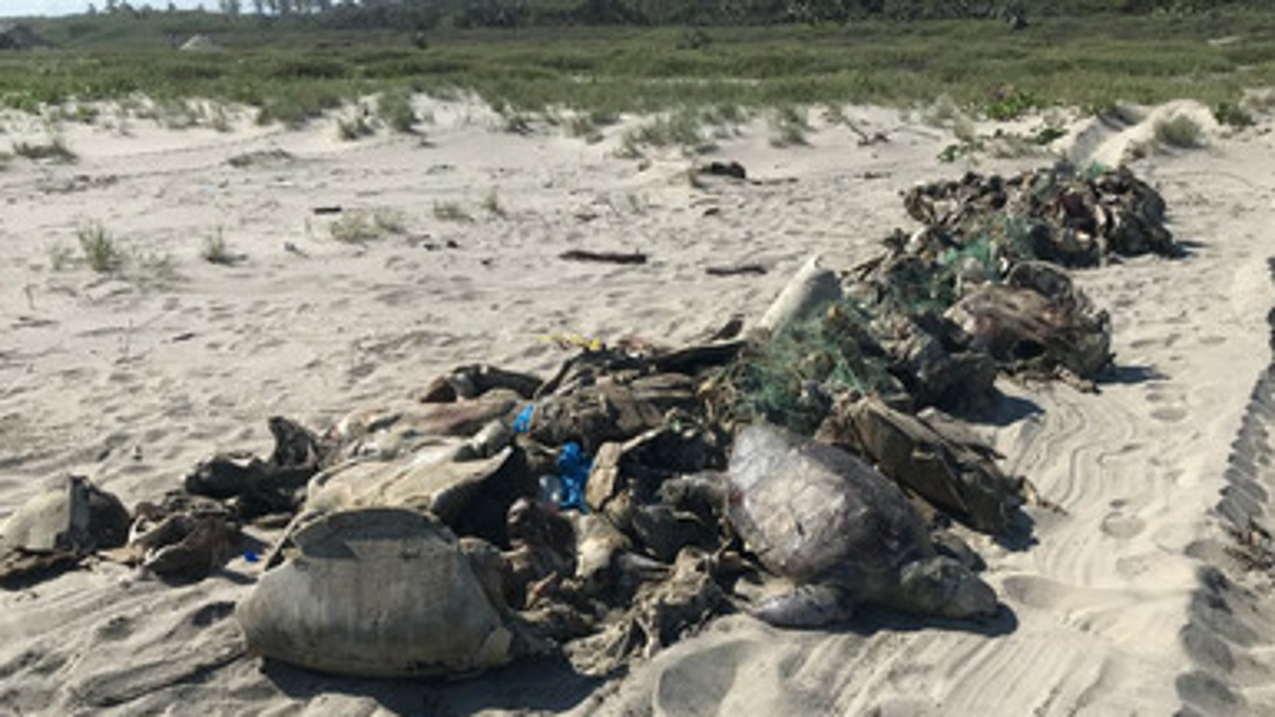 The turtle carcasses were brought ashore and buried in two pits (PROFEPA)