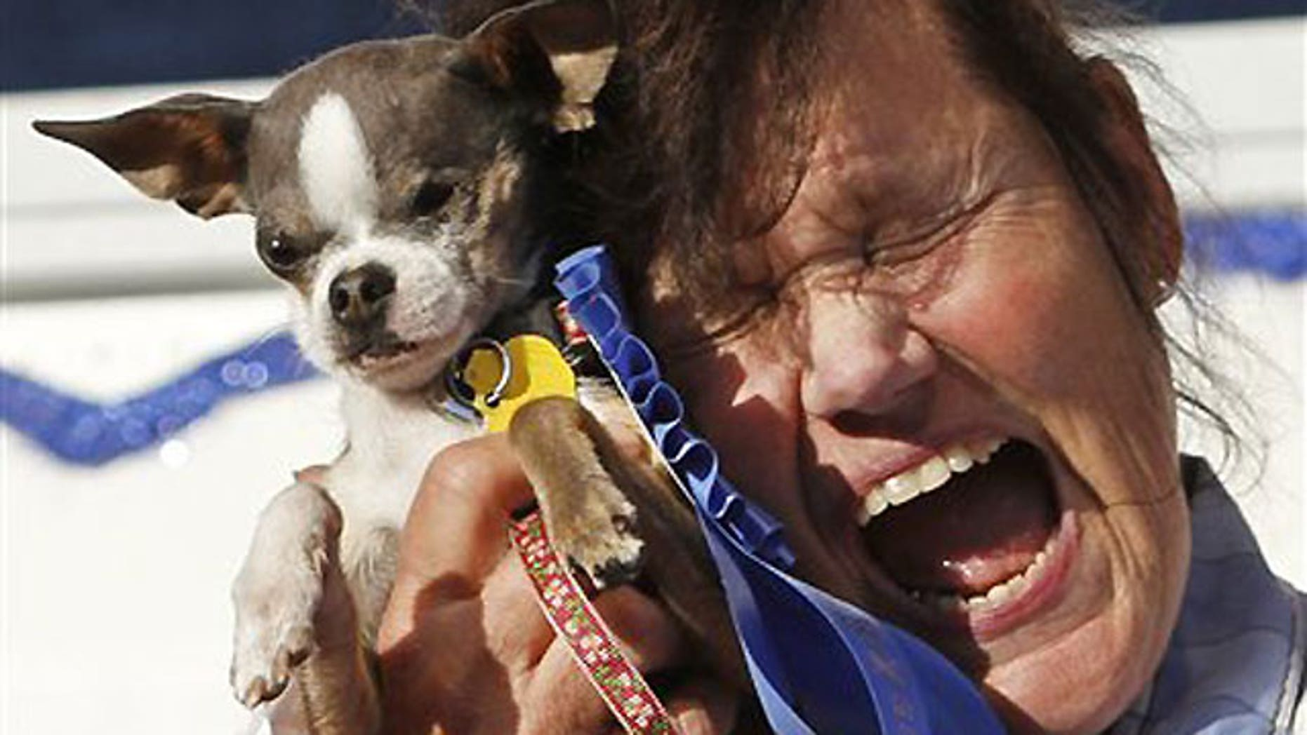 """June 25: Kathleen Francis clutches her purebred Chihuahua """"Princess Abby"""" after winning the World's Ugliest Dog Contest in Petaluma, Calif."""