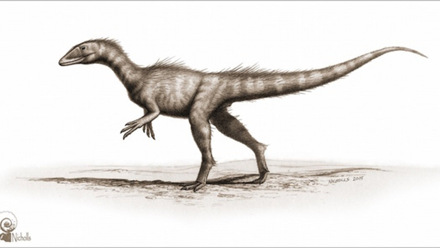 An illustration of the meat-eating dinosaur <i>Dracoraptor hanigani</i>, which might be the earliest known dinosaur discovered in the United Kingdom.