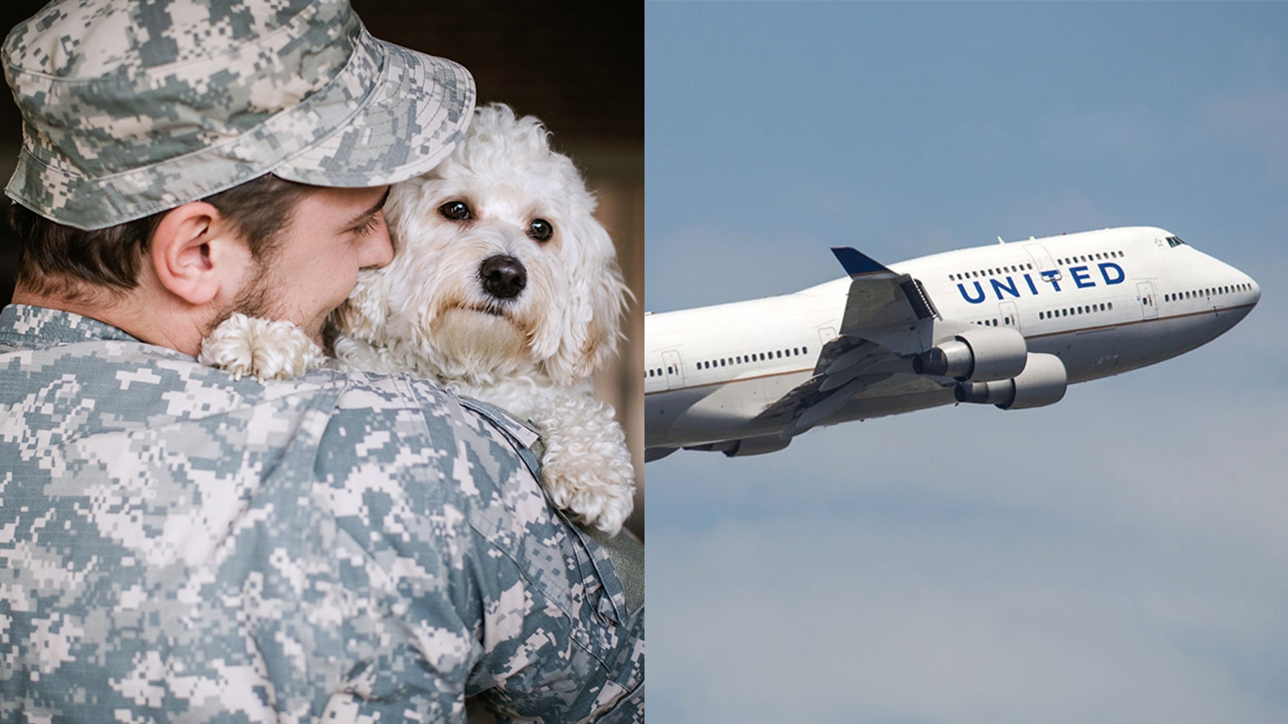 United is making an exception to its PetSafe travel program for military animals.
