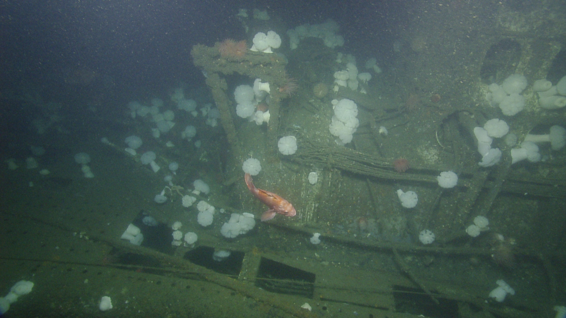 The wreck of the USS Bugara (OET/Nautilus Live).