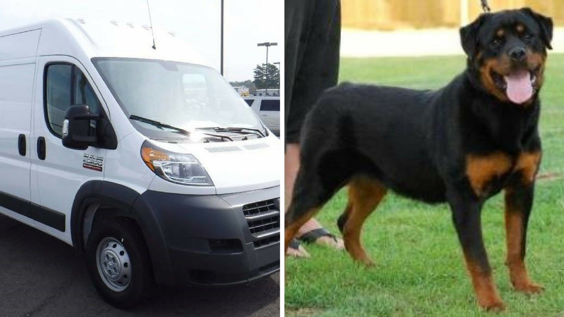 Authorities on Thursday located a stolen van with more than a dozen show dogs inside.