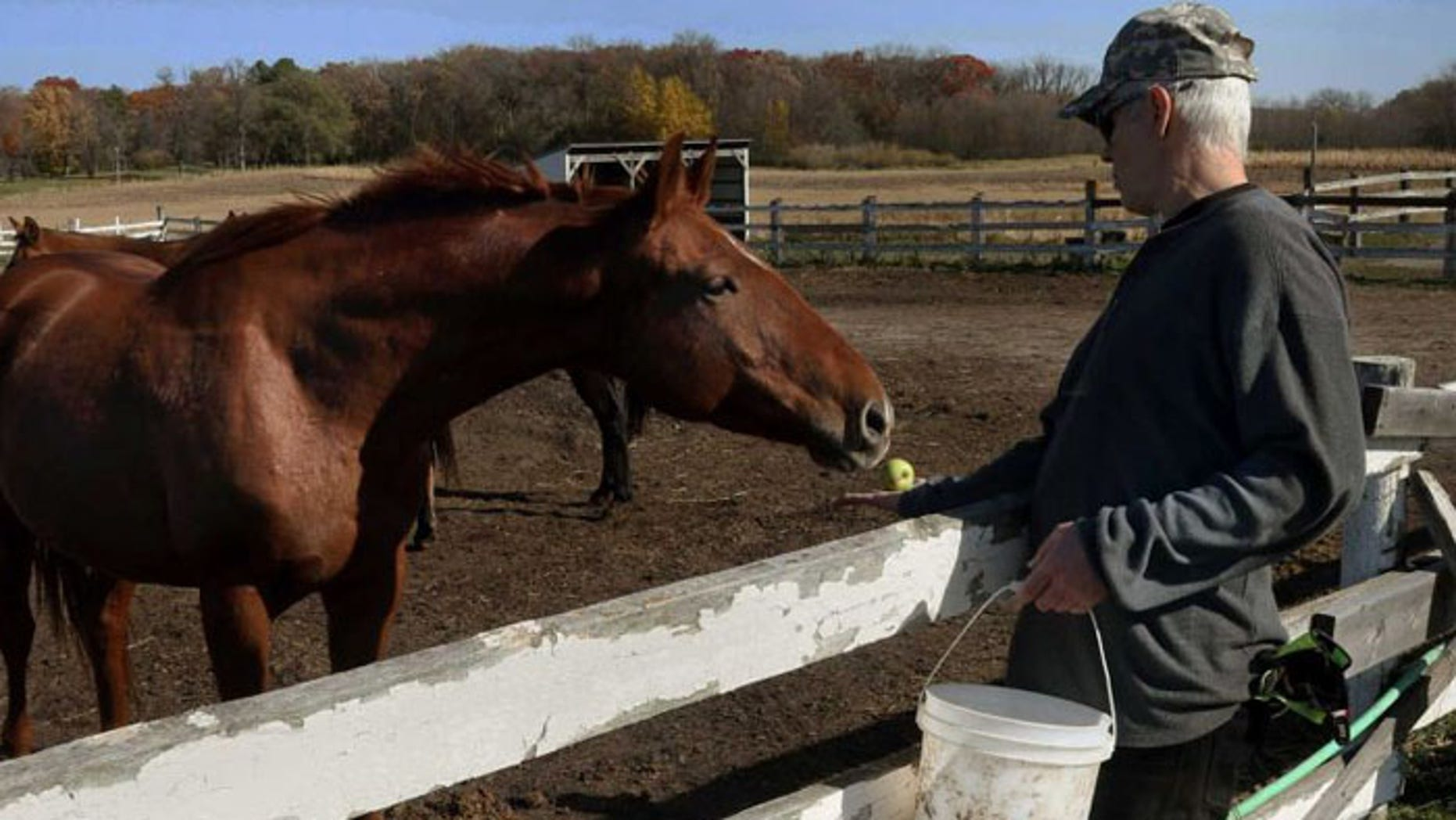 Randy Johnson offers an apple to a horse at Eagle's Healing Nest, a retreat for veterans, in Sauk Centre, Minn. (AP Photo/Jim Mone)