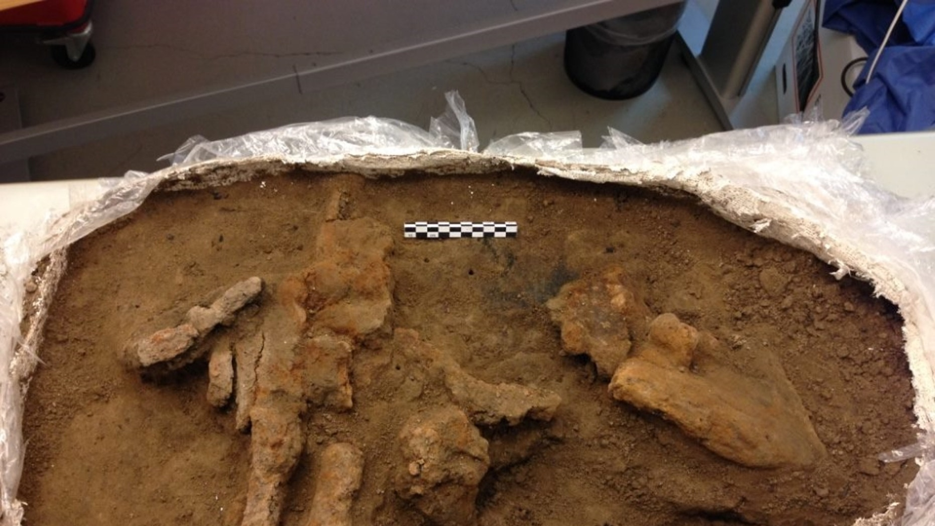 The remains of the toolbox were found in what archaeologists think was a workshop in the Viking fortress at Borgring.