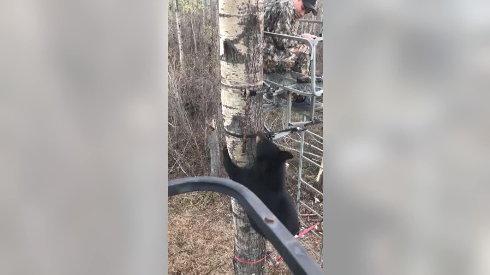 A video has gone viral of a teenager keeping his composure while a curious cub climbs up to investigate.