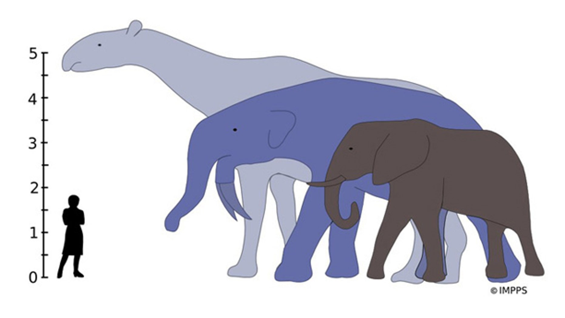 The largest land mammals that ever lived, Indricotherium and Deinotherium, would have towered over the living African elephant. The tallest on diagram, Indricotherium, an extinct rhino relative, lived between 37 and 23 million years ago, while Deinotherium (an extinct relative of modern elephants) was around from 8.5 million to 2.7 million years ago
