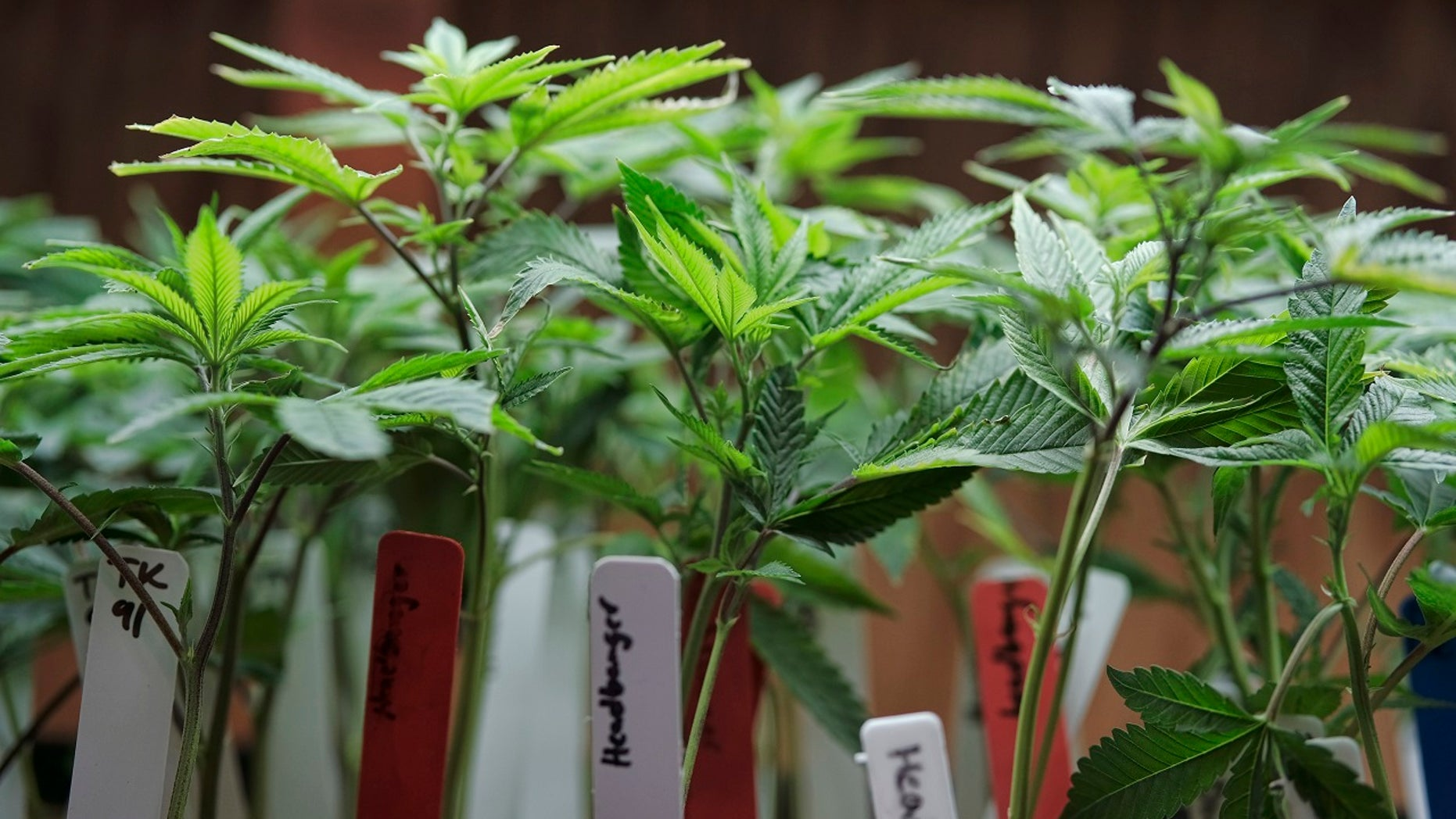 Vermont Gov. Phil Scott indicated he would sign a bill approved by both the House and Senate that would allow the recreational use of marijuana.