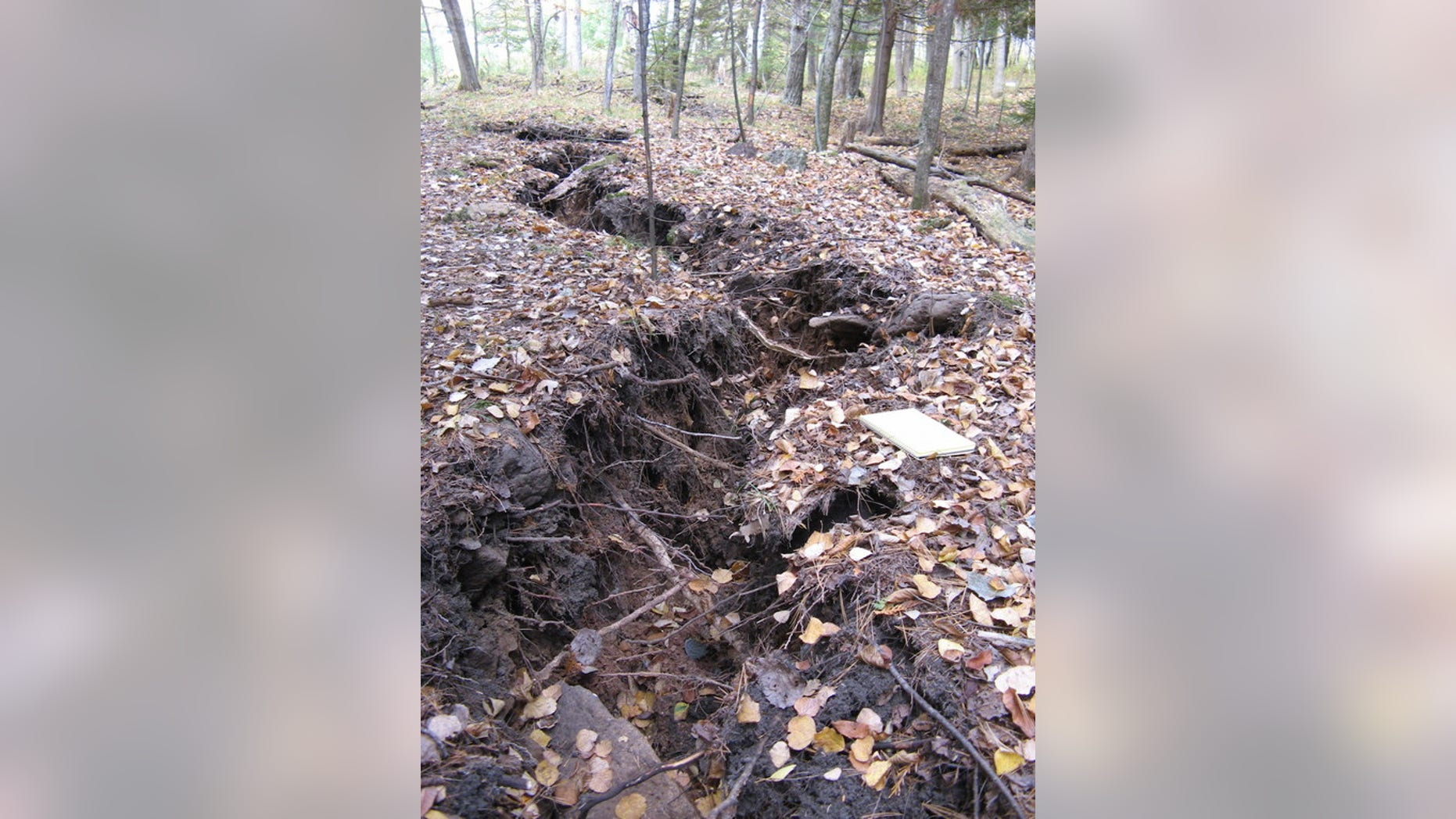 A long crack that popped up in a Michigan forest on Oct. 4, 2010, uprooted trees and caused others to tilt.