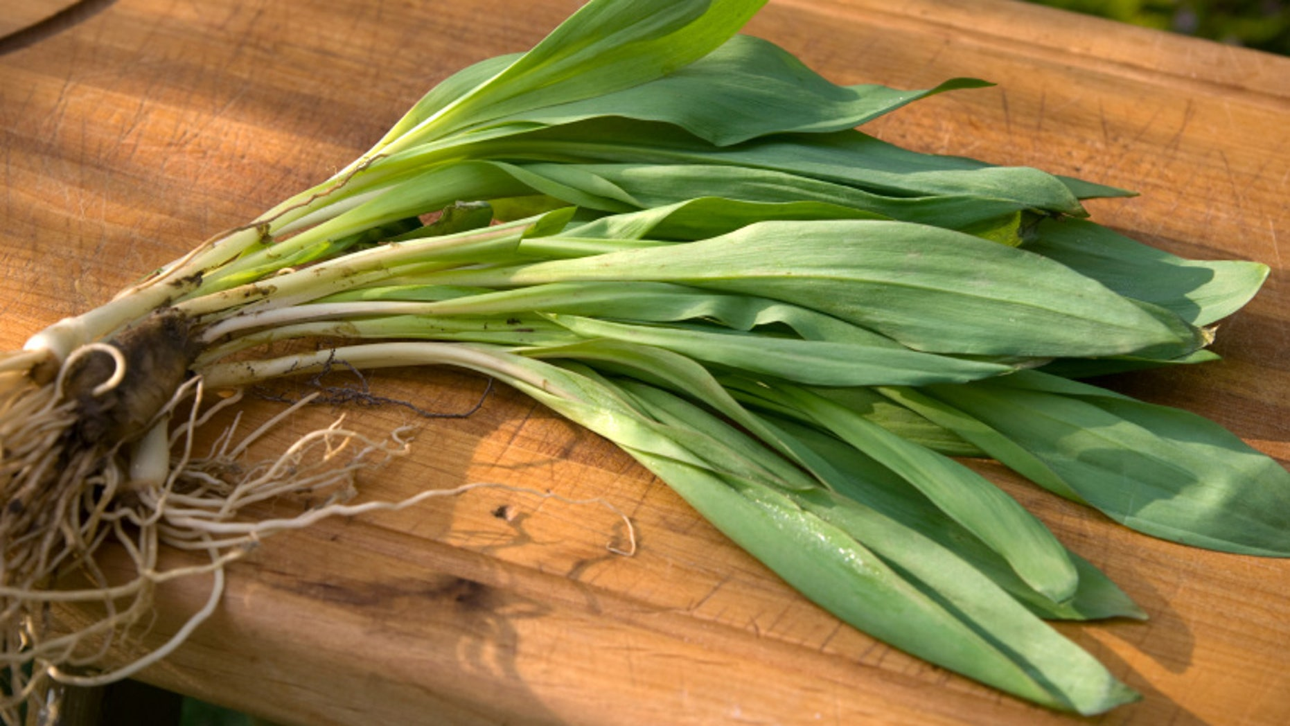 Ramps are considered a seasonal delicacy by chefs across the country.