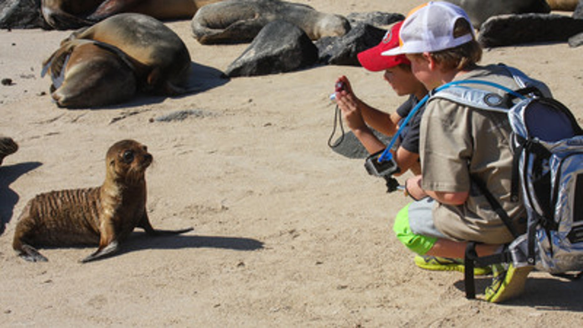 Taking pictures of the wildlife in the Galapagos Islands.