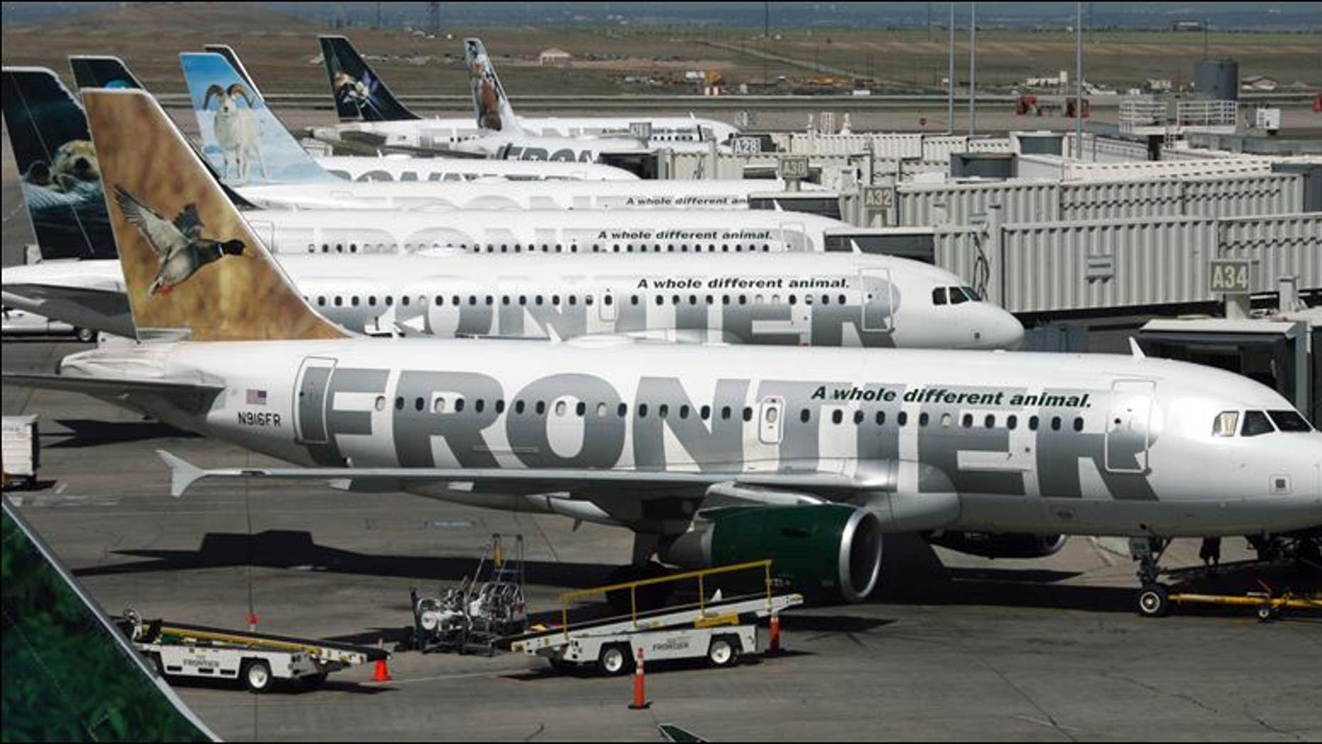 The low-cost carrier is based in Denver, Colo.