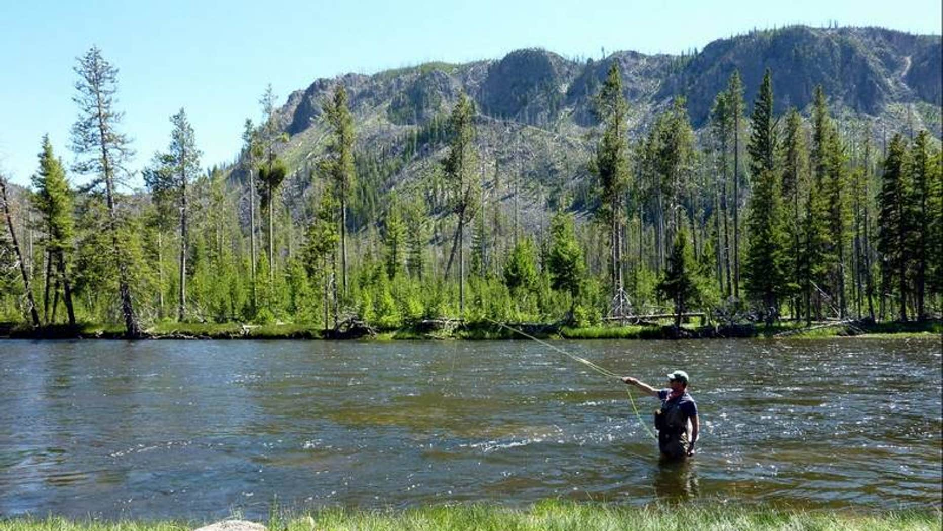Fishing in the upper Madison River in Yellowstone National Park.