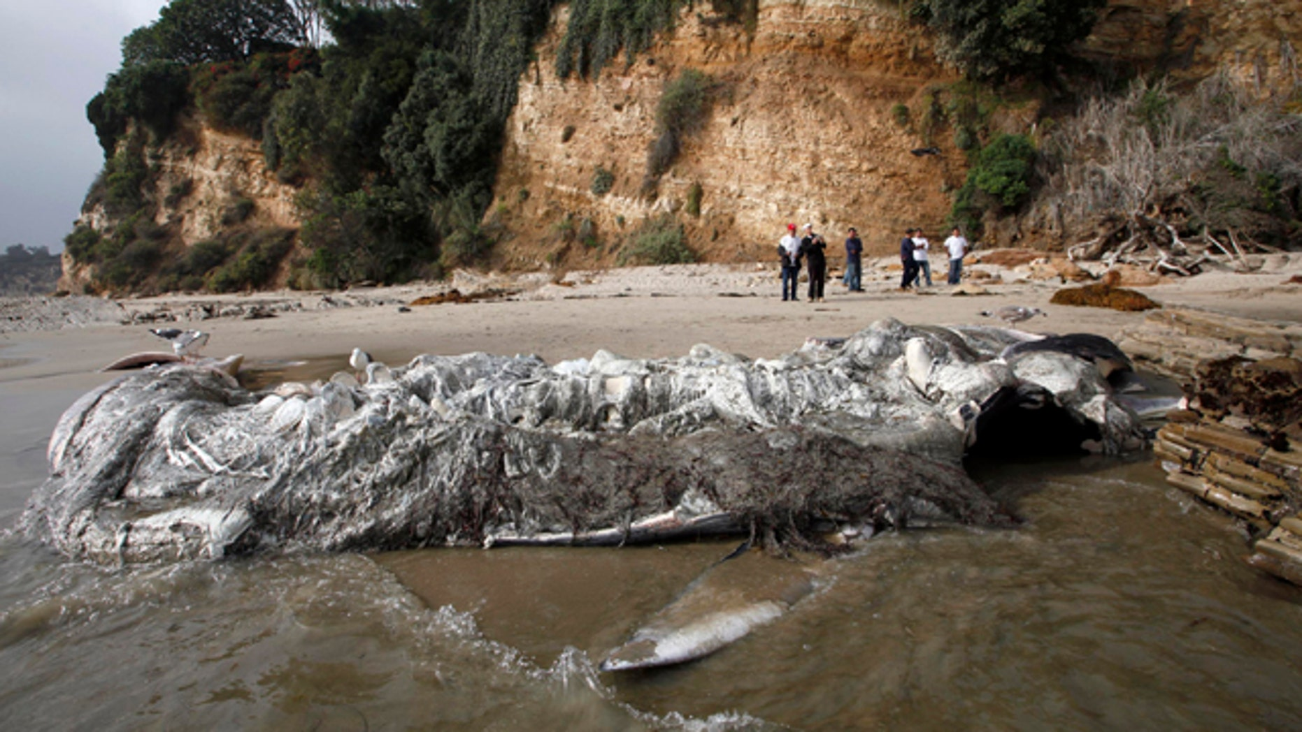Dec. 6, 2012: People look at a dead young male fin whale that washed up Monday between the Paradise Cove and Point Dume areas of Malibu, Calif.