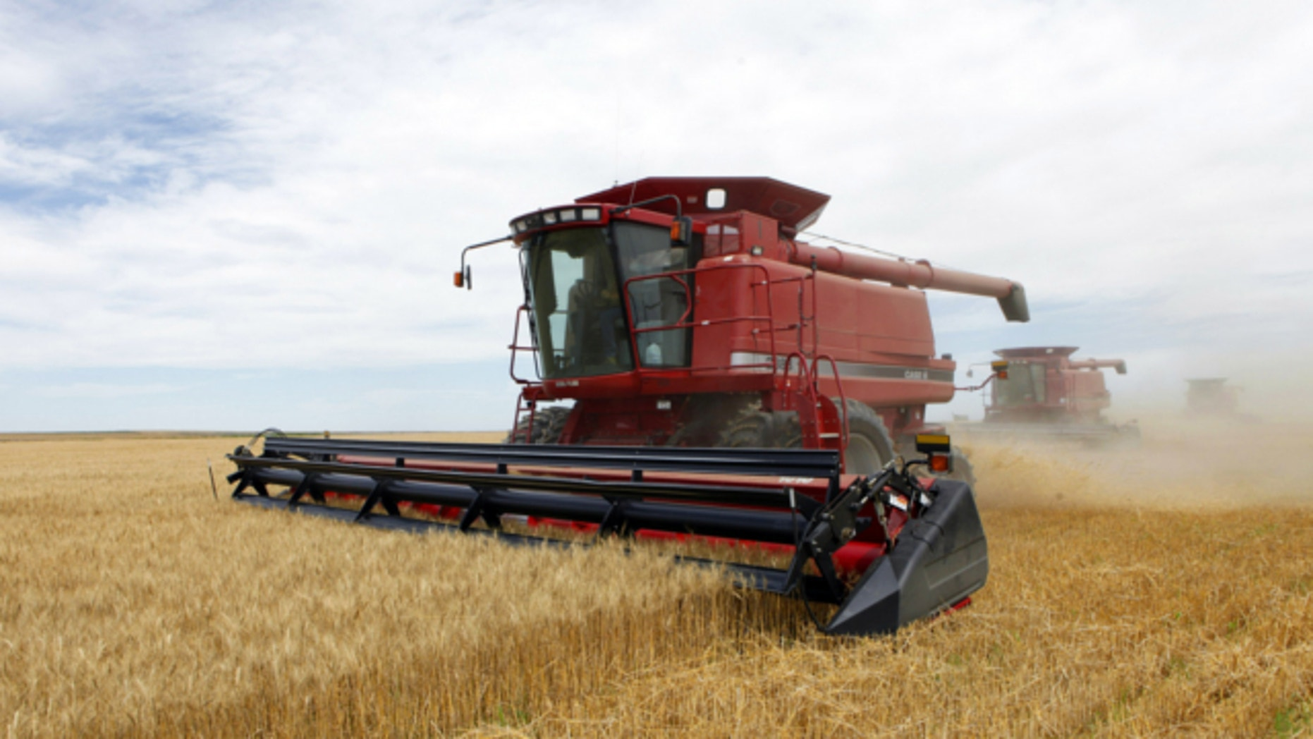 July 9, 2009: Three combines harvest the winter wheat on the Cooksey farm near Roggen, Colo.