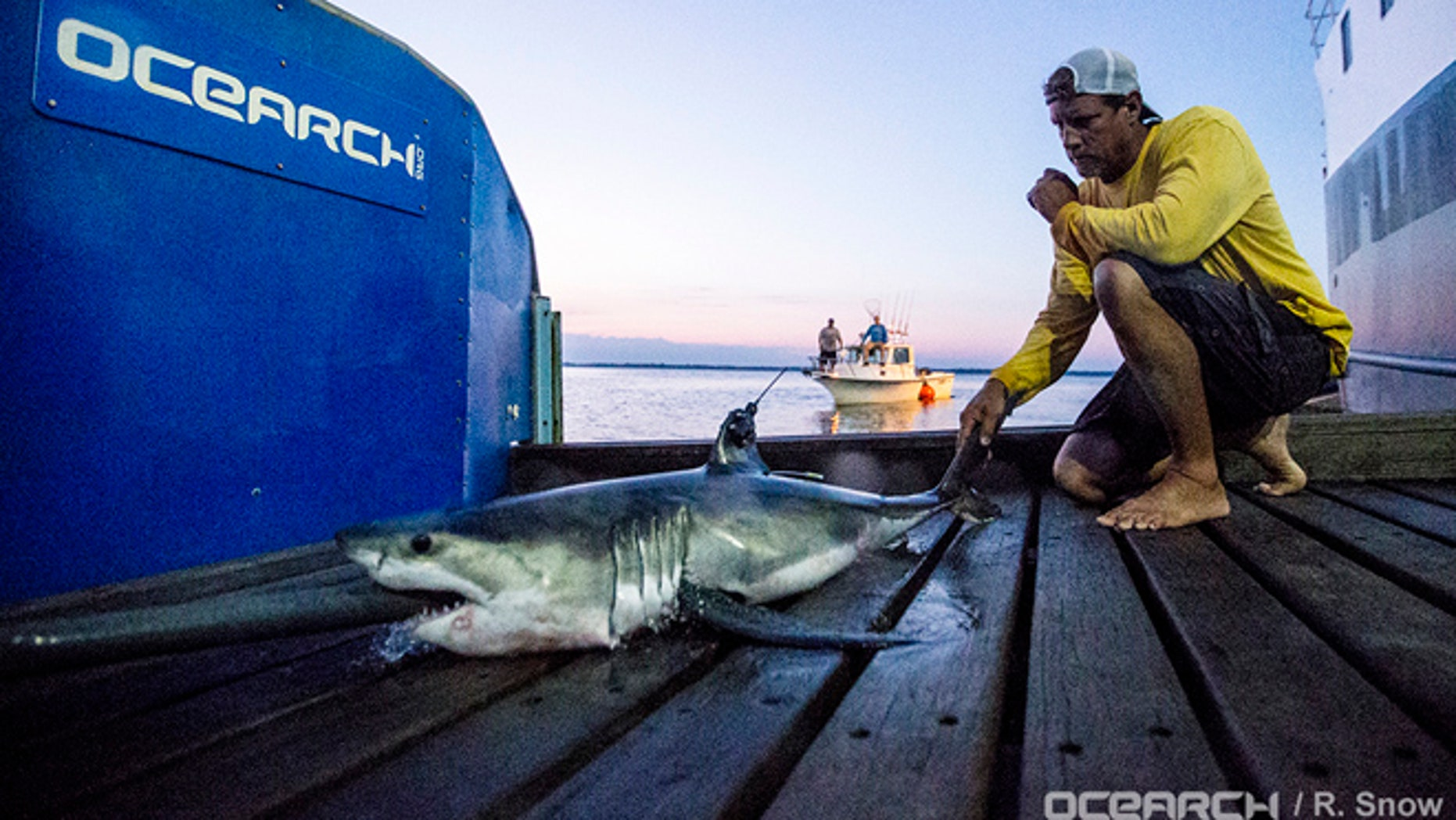 In This Aug 28 2016 Photo Provided By Ocearch Capt Brett Mcbride