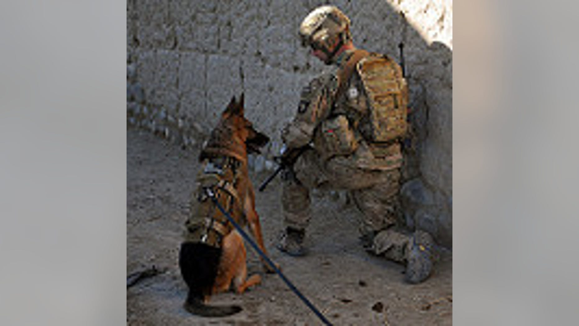 U.S. Army 1st Sgt. Brian Zamiska, 3rd Battalion, 187th Infantry Regiment, 3rd Brigade Combat Team, 101st Airborne Division (Air Assault), pulls security with a U.S. Air Force working dog, Jan. 6, 2013, during a patrol with the Afghan Border Police in Tera Zeyi district, Afghanistan. (U.S. Army photo by Spc. Alex Kirk Amen)
