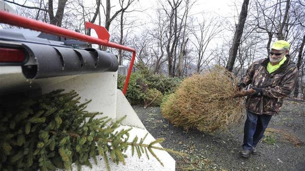 A wood chipper chopping Christmas trees in Johnstown.