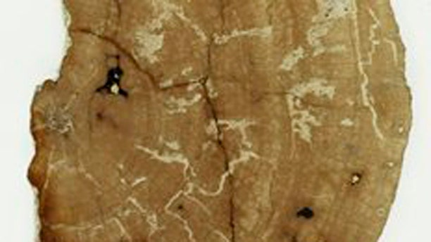 January 17, 2012: This image shows a polished section of fossil wood from the cabinet of Reverend John Henslow, Charles Darwin's mentor at Cambridge, comprising a 150 million years old tree.