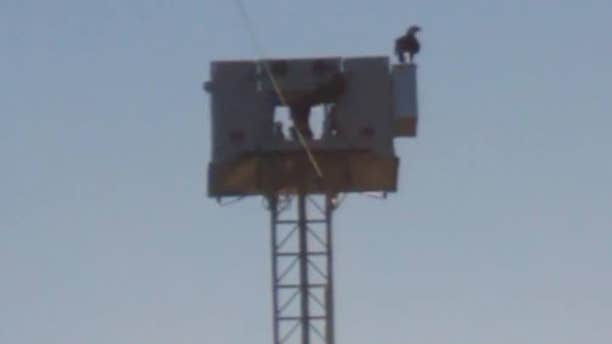 An eagle in Minnesota spent a moment of 9/11 perched in a fitting place on Highway 10.