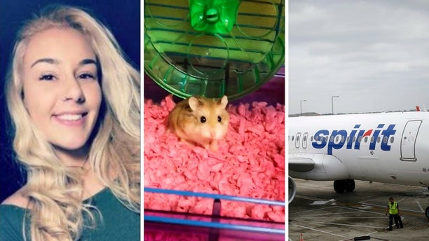 Belen Aldecosea claimed an Spirit Airlines employee suggested she flush her emotional support hamster, Pebbles (middle), down the toilet after the rodent was refused on board.