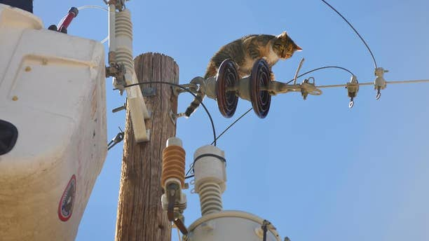 In this photo taken on Monday, March 17, 2014, Mary Lu Ward, left, of the Las Cruces Animal Control, calls to Athena as she was lifted in a utility bucket by El Paso Electric in Las Cruces, N.M.  Ward successfully rescued the cat, who had been stuck on top of the electrical pole for three days after possibly being chased by Coyotes. (AP Photo/The Las Cruces Sun-News, Carlos Javier Sanchez)