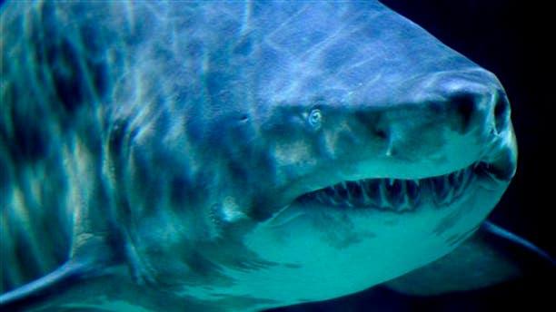 Fisherman found human remains inside a huge shark.