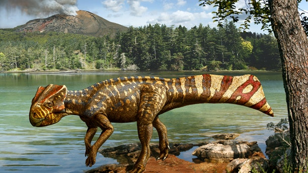 An artist's depiction of the fossil remains of Koreaceratops hwaseongensis, the first ceratopsian dinosaur from South Korea, were found in a block of rock along a reservoir in Korea.