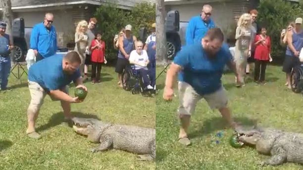A Louisiana man used his alligator Sally to announce the gender of his unborn child.