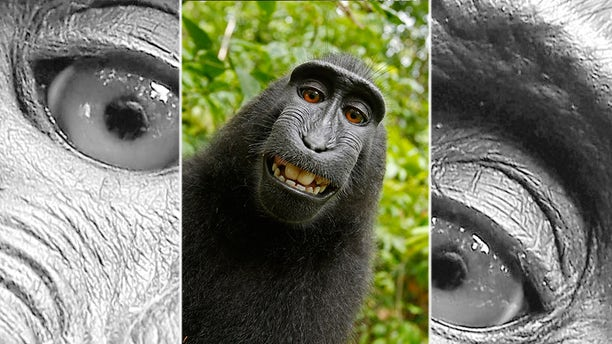 This 2011 photo provided by People for the Ethical Treatment of Animals (PETA) shows a selfie taken by a macaque monkey on the Indonesian island of Sulawesi with a camera that was positioned by British nature photographer David Slater. (David Slater/Court exhibit provided by PETA via AP)