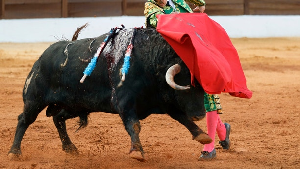 Spanish bullfighter Juan Jose Padilla performs during a bullfight at the southwestern Spanish town of Olivenza, Sunday, March 4, 2012.