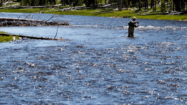 June 21, 2011: A fly fisherman on the Firehole River in Yellowstone National Park, Wyoming.
