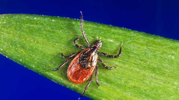 A woman in Japan has reportedly died from a tick-borne illness after being bitten by a stray cat who had the disease.