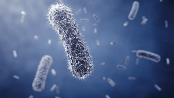 A study found that people with chronic fatigue syndrome had higher levels of certain gut bacteria and lower levels of others compared to healthy people who didn't have the condition.