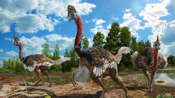 The newly identified oviraptorid dinosaur <i>Corythoraptor jacobsi</i> has a cassowary-like head crest, known as a casque.