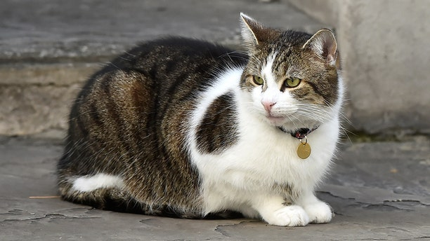 California man sentenced to ten years jail for scores of cat murders