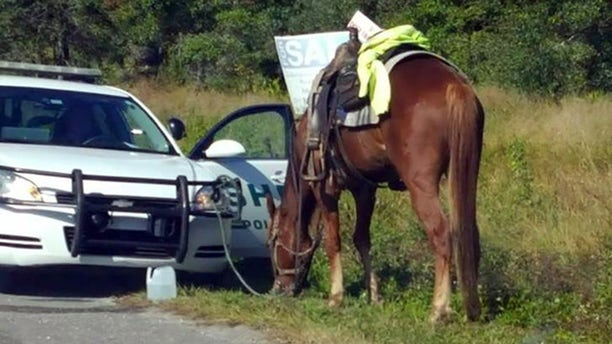 A woman on horseback was stopped and charged with driving drunk in Florida.