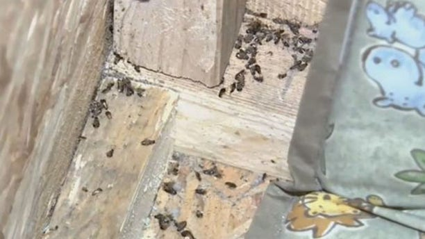 The box smelled of urine and had dead bugs on the floor, authorities said.