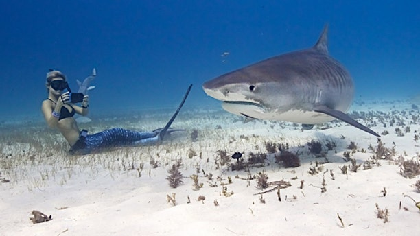 Go ahead, swim with a shark.