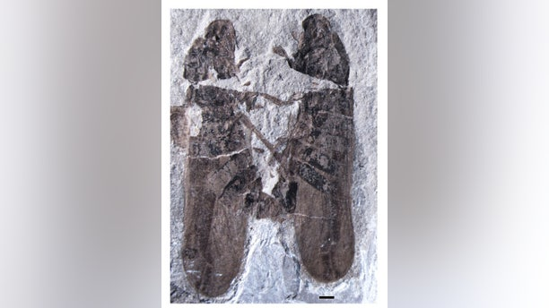 A fossil of two ancient insects in a love clinch has been unearthed in China. The fossil is the oldest example of insect sex ever found.
