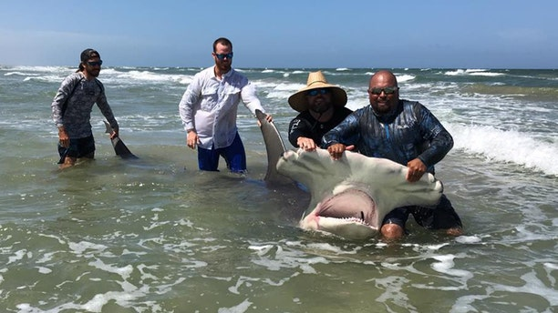"""Poco Cedillo said he noticed the shark was sick, and """"very tired"""" when a group of people tried to release it back into the Gulf of Mexico."""