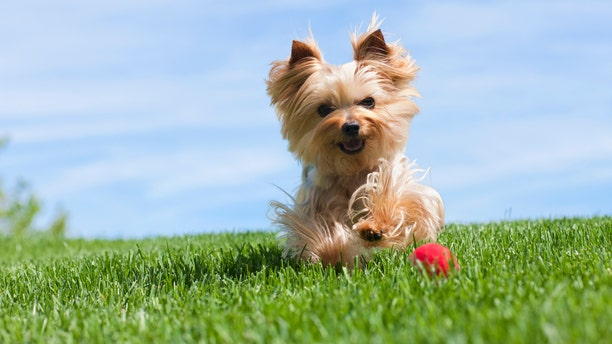Even the best-trained pets have accidents now and then, and not just during summer!