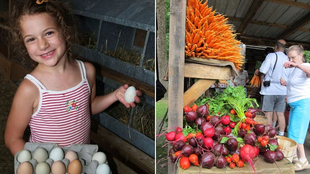A girl collects eggs at Valley Farms, while customers look at the bounty of vegetables at the farmer's market in Brattleboro, Vt.