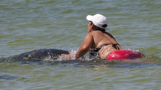 Sept. 30, 2012: Ana Gloria Garcia Gutierrez was reportedly photographed riding a manatee despite signs around the beach and various beachgoers asking her to get off the mammals.