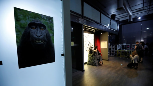 File photo - A print of a monkey selfie is on display during a VIP media preview ahead of the opening of The Museum of Selfies in Glendale, California, U.S., March 29, 2018. (REUTERS/Mario Anzuoni)