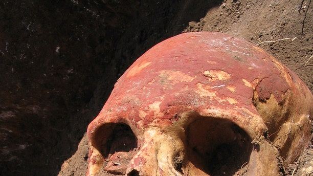 In this undated photo released by Cell journal, a Bronze Age human skull painted with red ochre, from the Yamnaya culture of Central Asia, one of the cultures that carried the early strains of plague. (Simon Rasmussen/Cell 2015 via AP)